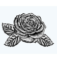 rose bud with leaves painted in watercolor style vector image