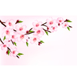 Spring background of a blossoming tree branch with vector image