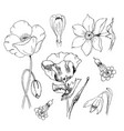 flowers in black ink poppy narcissus crocus vector image