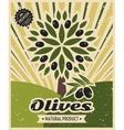Vintage olive poster template design vector image