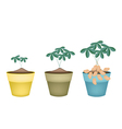 Three Peanuts Plant in Ceramic Flower Pots vector image