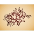 Vintage flower Hand drawn retro sketch jasmine vector image vector image