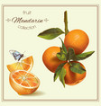 Realistic of mandarin vector image