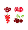 red berries on white background vector image