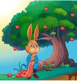 A rabbit vector image vector image