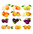 apricots pears and plums vector image vector image