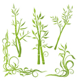 Bamboo plant vector image vector image
