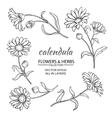 Calendula set vector image