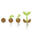 set of phases plant growth vector image