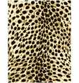 cheetah leopard animal skin texture vector image vector image