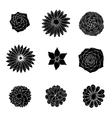 Set flowers vector image vector image