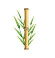 fresh bamboo leaves border botanical zen forest vector image
