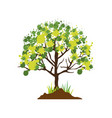 colorful silhouette with leafy tree vector image