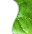 Leaf Poster vector image