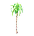 palm tree drawing isolated on white background vector image