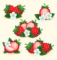 strawberry freshness fruit set vector image