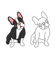 cute french bulldog vector image