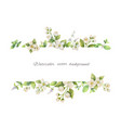 watercolor banner of flowers jasmine and vector image
