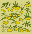 isolated olive branches set vector image