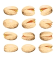 pistachio fruit set vector image