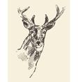 Deer head hand drawn sketch vector image