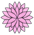 Pink flower lotus on white background isolated vector image