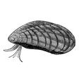 Mussels vintage engraving vector image