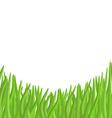 Green grass on a white background garden vector image