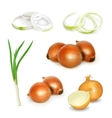 Onion set vector image vector image