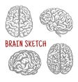 Human brain at different angles engraving sketches vector image