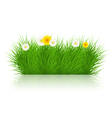 grass on white background eps10 vector image