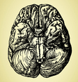 old time hand drawn brain vector image vector image