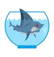 Shark in Aquarium Angry Marine predator with large vector image