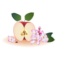 apple and ladybird vector image vector image