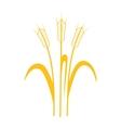 Ears of Wheat Barley or Rye vector image