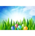 Easter eggs in the grass vector image