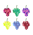 Grape bunches of different colors vector image