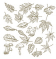 set of hand drawn leaves berries and mushrooms vector image