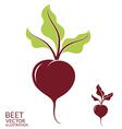 Beet vector image