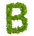 Letter B of green leaves alphabet vector image