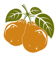 Two orange simple pears with green leaves ripe vector image