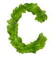 Letter C of green leaves alphabet vector image
