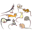 rats vector image