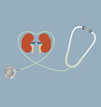 a concept for healthy kidneys stethoscope in vector image