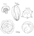 hand drawn different kind of cabbage vector image