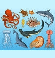 fishes set or sea creature nautilus pompilius vector image