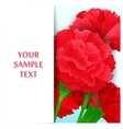 Card with flowers Carnations vector image