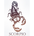 Hand drawn Scorpion symbol of Scorpio vector image