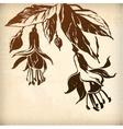ornamental fuchsia flower card vector image