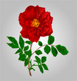 Rose red flower stem with leaves and blossoms vector image